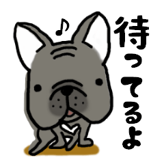 Frenchbulldog of ROSSI