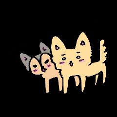 Pikkun and Muuchan The Chihuahuas