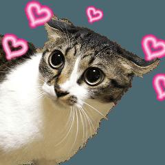 LINEスタンプランキング(StampDB) | 動く猫ちゃん