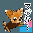 LINEスタンプランキング(StampDB) | チワワのぷぷちゃん