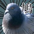 LINEスタンプランキング(StampDB) | 動く!野生の鳩(リアル)