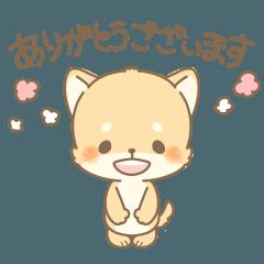 LINEスタンプランキング(StampDB) | しば犬くんの親切で丁寧なスタンプ