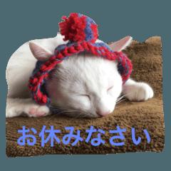 白ネコゆきの写真スタンプ