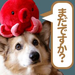 LINEスタンプランキング(StampDB) | コーギー犬ろん