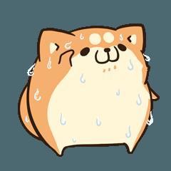 LINEスタンプランキング(StampDB) | ボンレス犬 in さま?