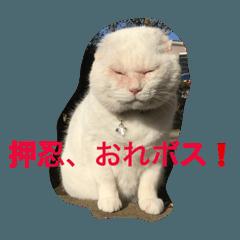 LINEスタンプランキング(StampDB) | 押忍!おれボス。野良猫上等っす!