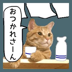 LINEスタンプランキング(StampDB) | 茶トラ猫ガットくん3