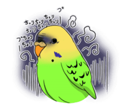 Parakeet's my home! sticker #161479