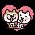 柴犬カップル