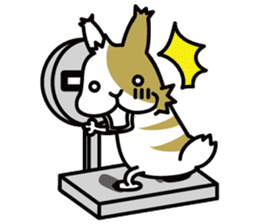 Rabbit's daily Stamp sticker #249032