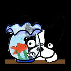 frenchbulldog P-chan