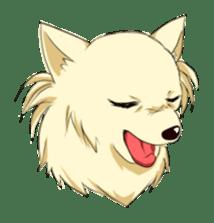 Long Coat Chihuahua sticker #270145