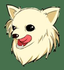 Long Coat Chihuahua sticker #270146