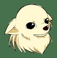 Long Coat Chihuahua sticker #270147