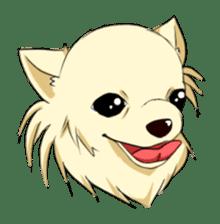 Long Coat Chihuahua sticker #270148
