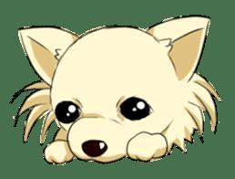 Long Coat Chihuahua sticker #270149