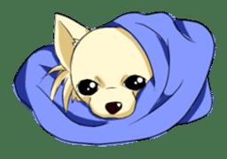 Long Coat Chihuahua sticker #270150