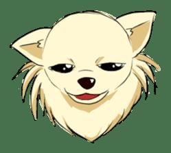Long Coat Chihuahua sticker #270151