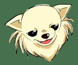 Long Coat Chihuahua sticker #270152