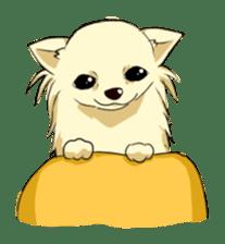 Long Coat Chihuahua sticker #270154