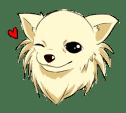 Long Coat Chihuahua sticker #270156