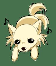 Long Coat Chihuahua sticker #270157