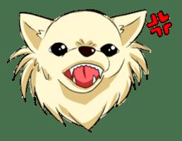 Long Coat Chihuahua sticker #270158