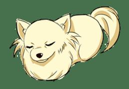 Long Coat Chihuahua sticker #270159