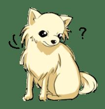 Long Coat Chihuahua sticker #270160