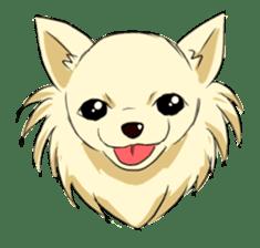 Long Coat Chihuahua sticker #270162