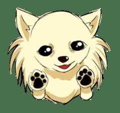 Long Coat Chihuahua sticker #270163