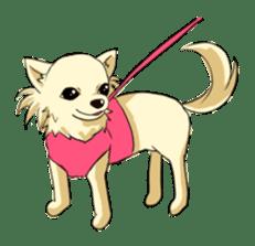 Long Coat Chihuahua sticker #270166