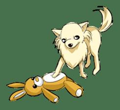 Long Coat Chihuahua sticker #270167
