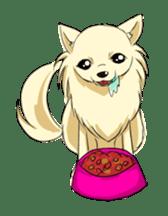 Long Coat Chihuahua sticker #270168