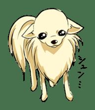 Long Coat Chihuahua sticker #270169