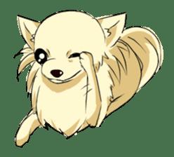 Long Coat Chihuahua sticker #270172