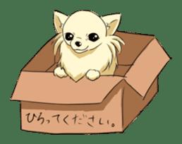 Long Coat Chihuahua sticker #270174