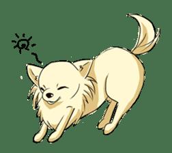 Long Coat Chihuahua sticker #270176
