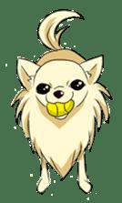 Long Coat Chihuahua sticker #270178