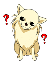 Long Coat Chihuahua sticker #270179
