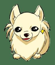 Long Coat Chihuahua sticker #270182