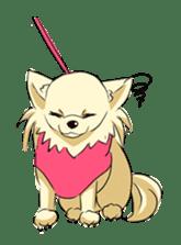 Long Coat Chihuahua sticker #270184