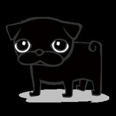 Black Pug DOM
