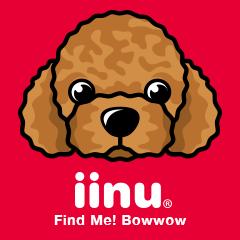 iinu  - Toy Poodle
