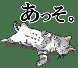 Cat American Short hair sticker #286426