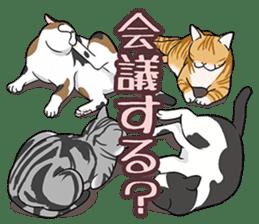 Cat American Short hair sticker #286427