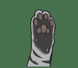 Cat American Short hair sticker #286441
