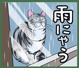 Cat American Short hair sticker #286448