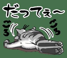 Cat American Short hair sticker #286449