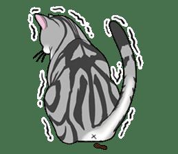 Cat American Short hair sticker #286455